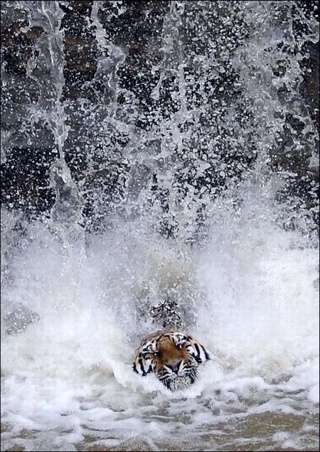 滝のような雨。多分滝。